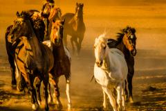 Horse-Run-1